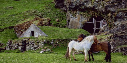 horses-945388_1280